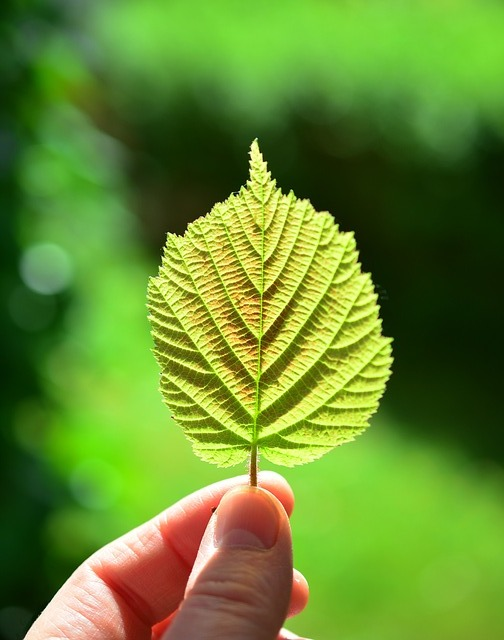 A leaf representing the Support Services, counseling and consultation offered at TheraThrive