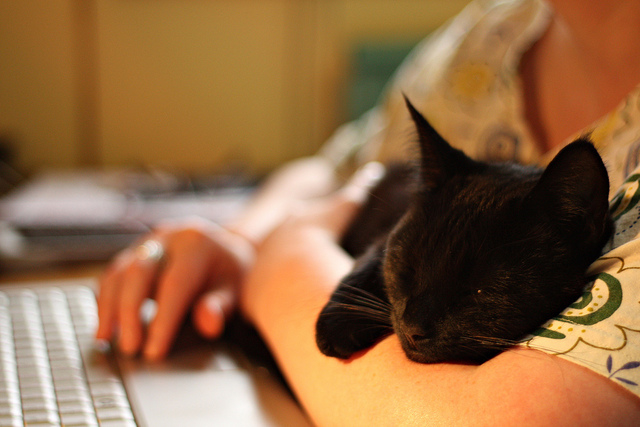 Woman with Cat and Laptop, image by A Brinsky